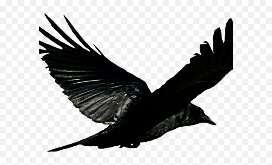Bird Flying Bathroom Shower Curtain - Eagle Emoji