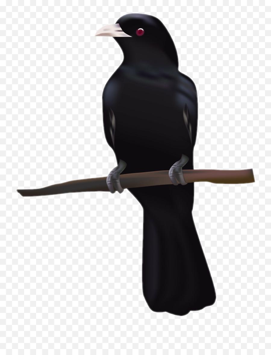 Raven Bird Black Rabe Tier Schwarz - Koyal Bird Emoji