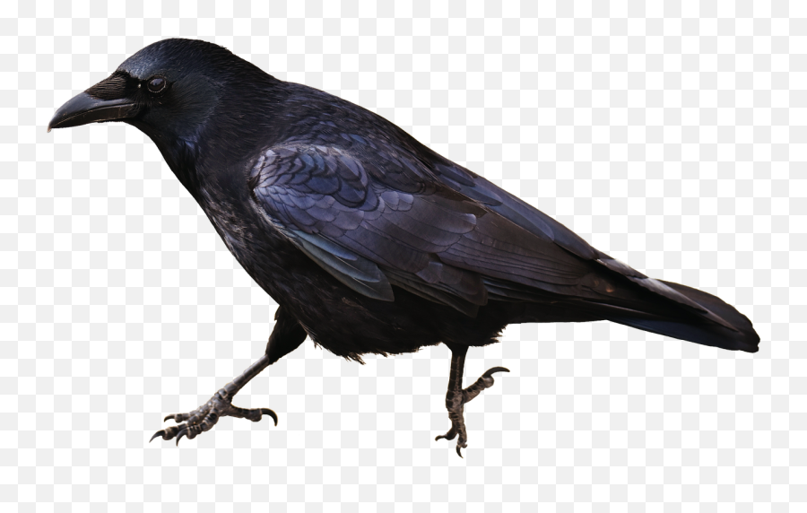 Isolated Crow Bird Carrion Crows Animal - Raven Silhouette No Background Emoji