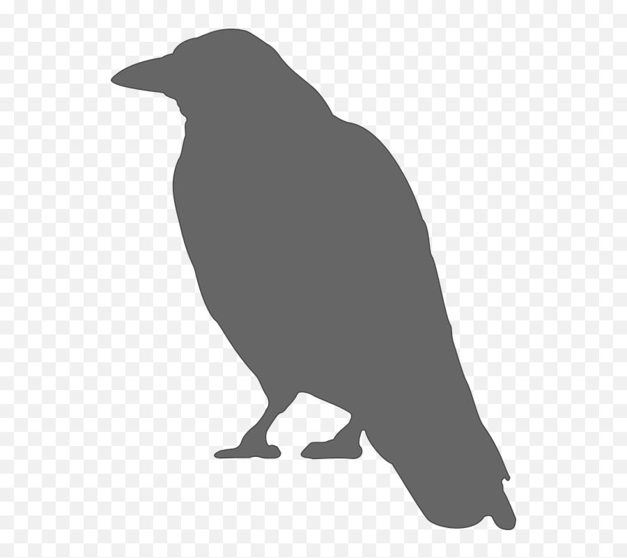 Crow Bird Grey - Crow Silhouette Emoji