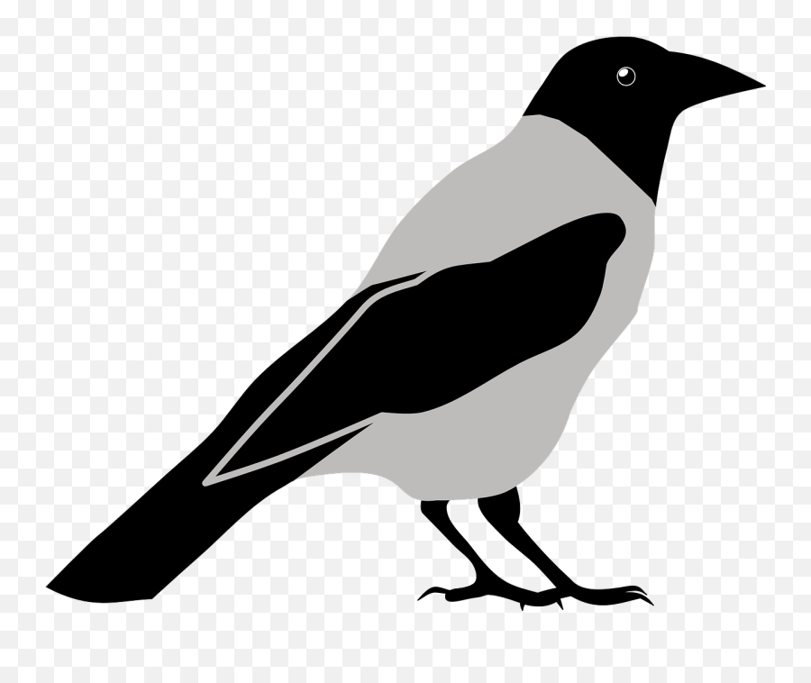 Animal Bird Crow Magpie Free Vector - Crow Png Clipart Emoji