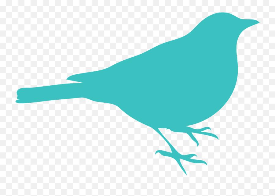 Blackbird Bird Sit Silhouette Blue - Silhouette Bird Clipart Cardinal Emoji