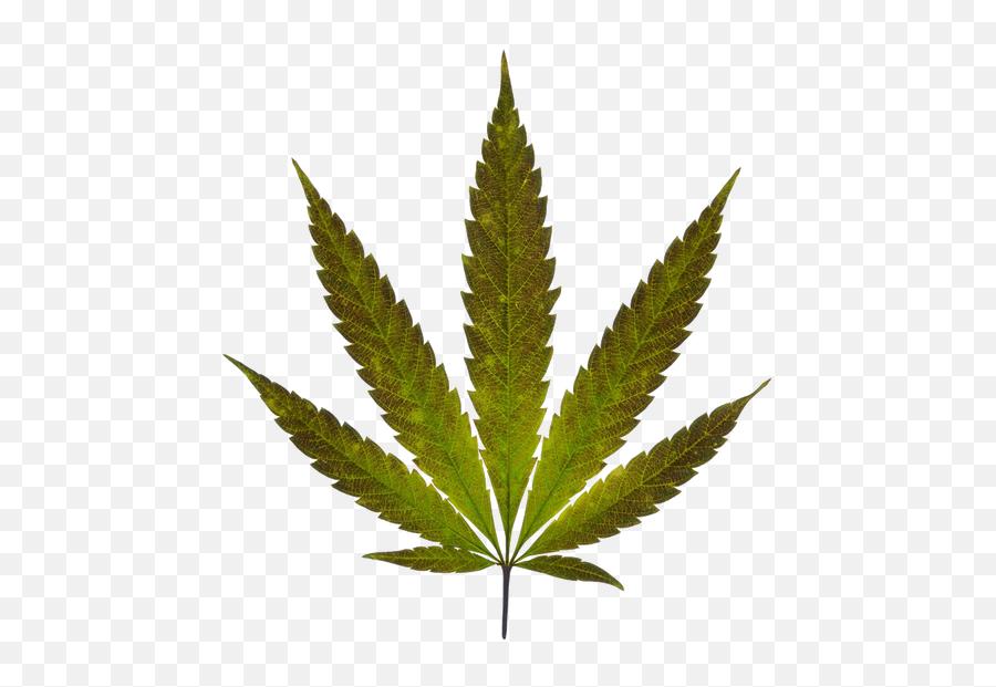 Weed Vancouver Archives - Marijuana Leaf Emoji