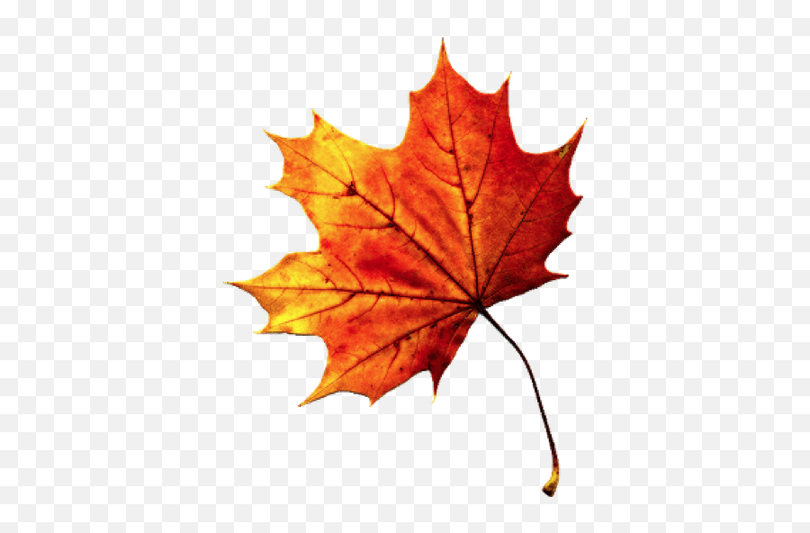 Fall Autumn Leaf Freetoedit - Fall Leaf Transparent Background Emoji,Autumn Leaf Emoji