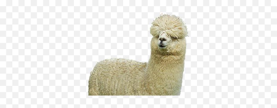 Hq Png And Vectors For Free Download - Dlpngcom Alpaca Png Emoji,Llama Emoji Iphone