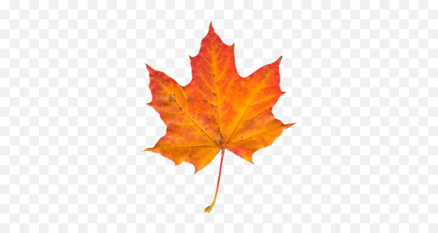 Leaf Png And Vectors For Free Download - Leaf Png Emoji,Autumn Leaf Emoji