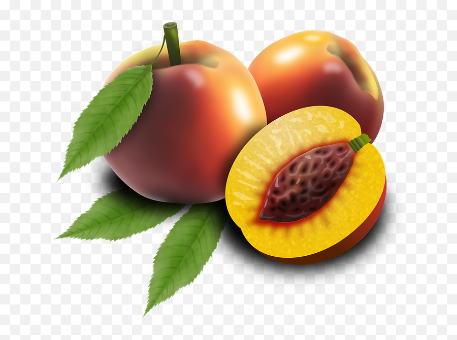 1 Free Orchard Apple Images - Broskyna Png Emoji,What Does The Peach Emoji Mean
