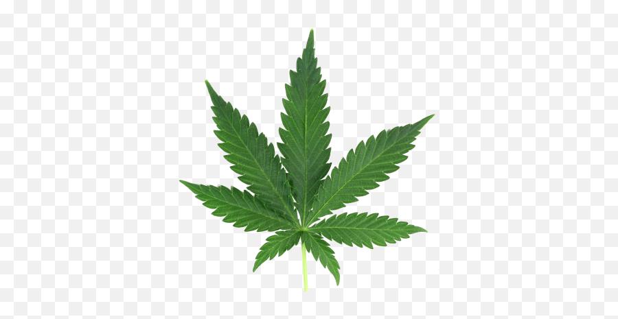 Marijuana Png And Vectors For Free Download - Transparent Weed Png Emoji