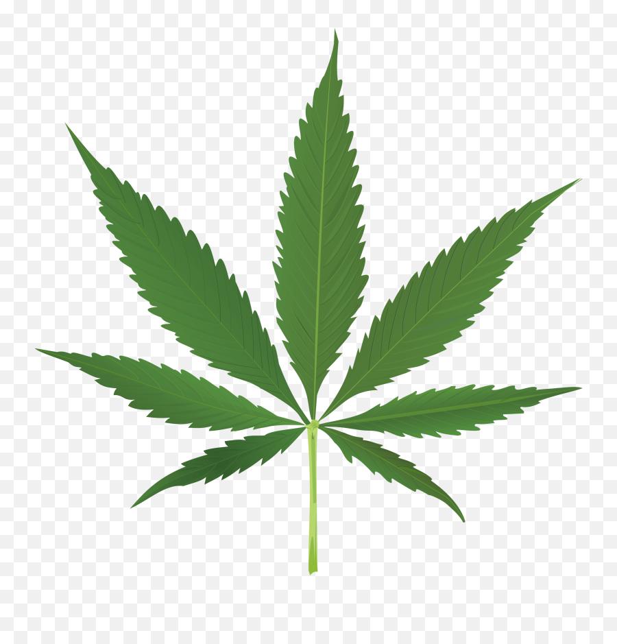 Weed Leaf Transparent Background Free Weed Leaf - Cannabis Leaf Png Emoji
