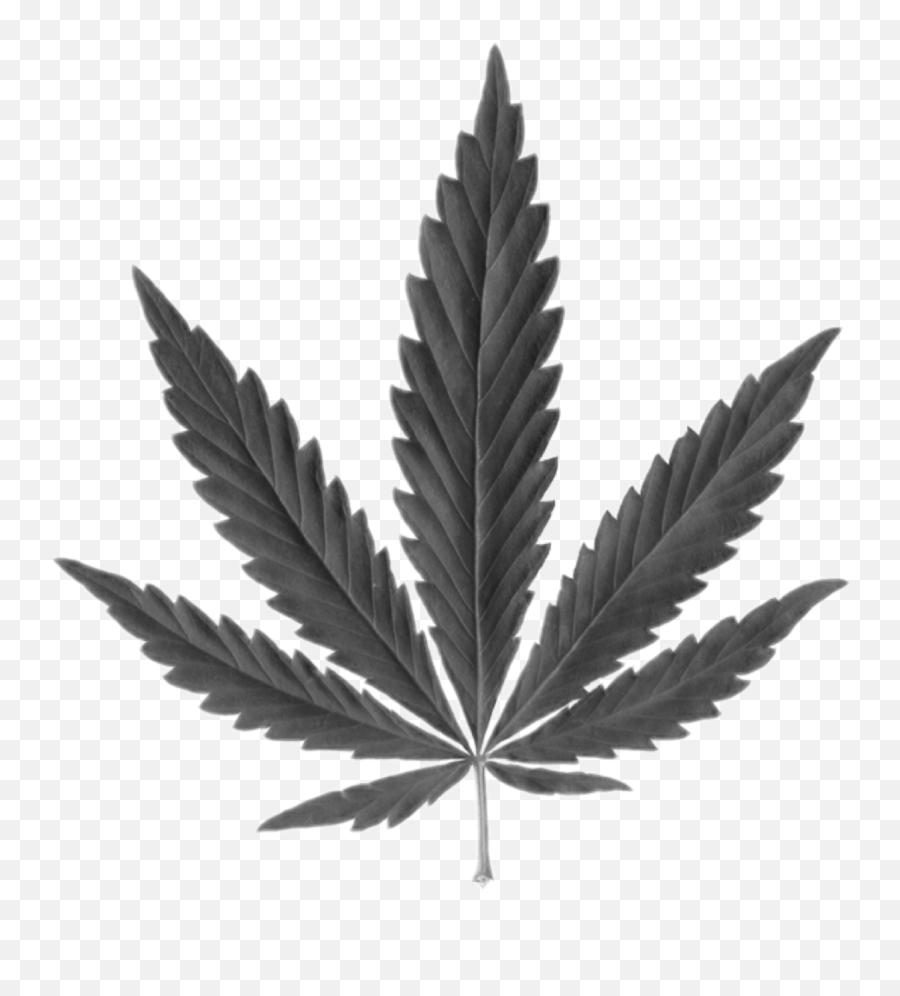 Weedleaf - Transparent Background Weed Leaf Png Emoji
