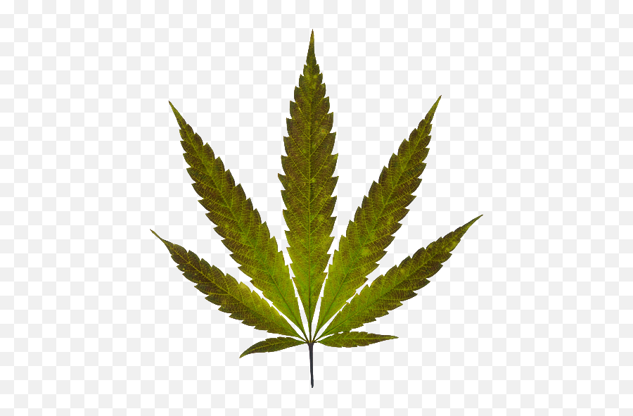 Marijuana Leaf - Pot Leaf Emoji