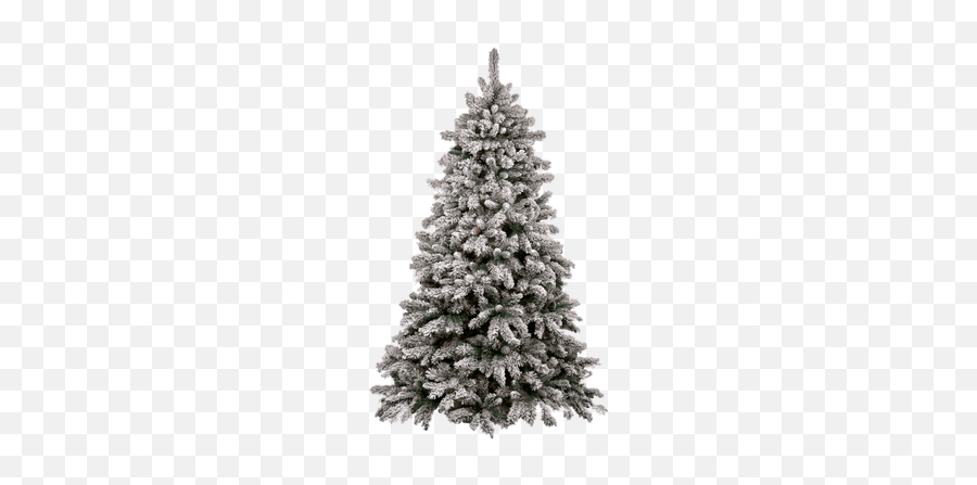 Search Results For Bonsai Trees Png - 6ft Pre Lit Snowy Christmas Tree Emoji,Christmas Tree Emojis