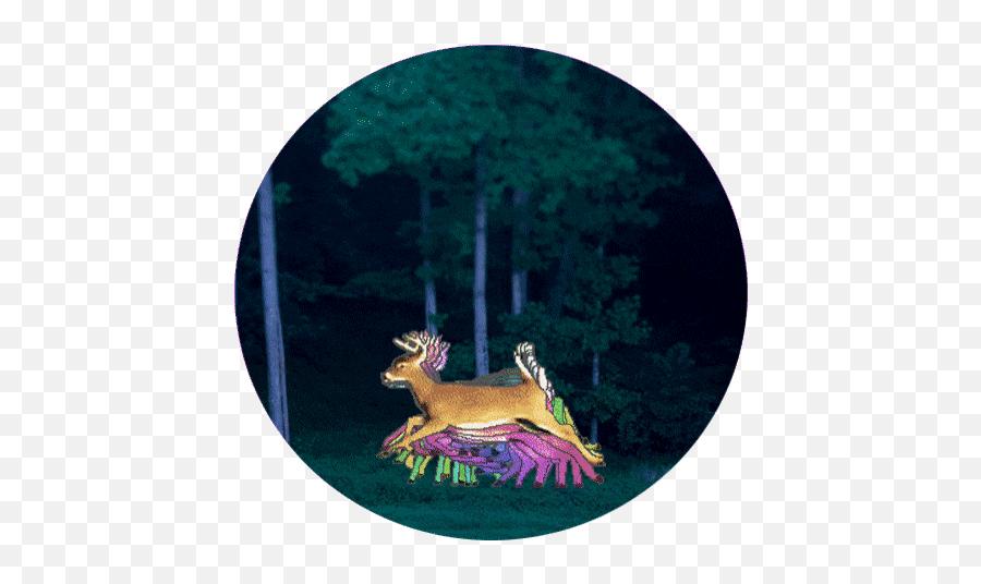 Top Craig Deering Stickers For Android - Deer Emoji,Deer Emoji Iphone