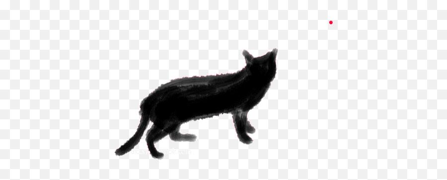 Top Funny Cats Video Stickers For - Black Cat Gif Transparent Emoji,Black Cat Emoji