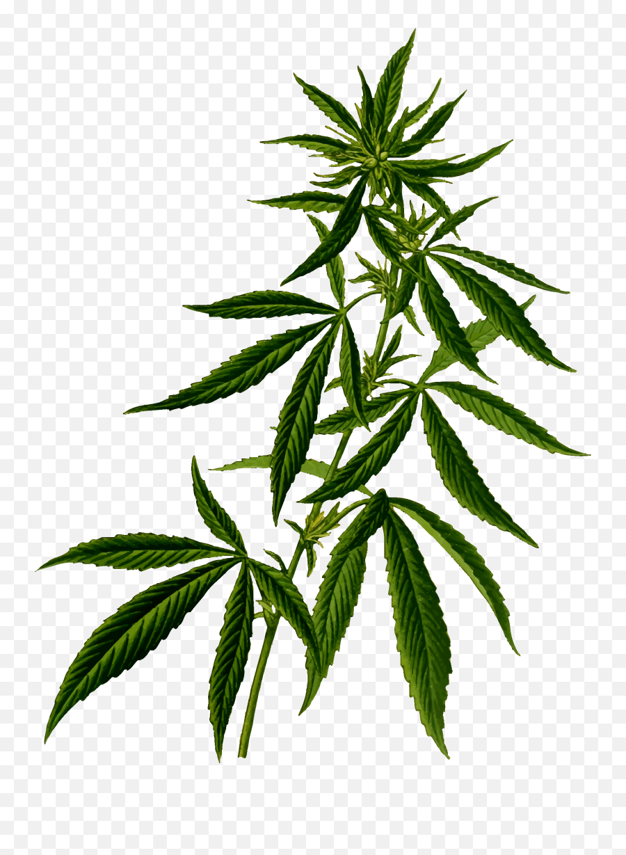 Cannabis Vector Clipart Image - Transparent Weed Plant Png Emoji
