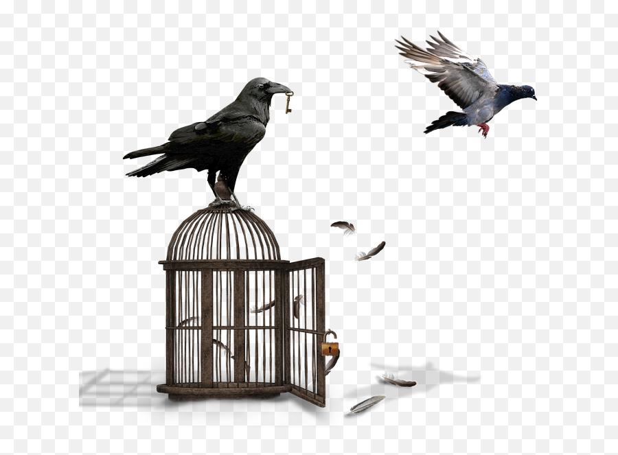 Cage Raven Dove - Common Raven Emoji