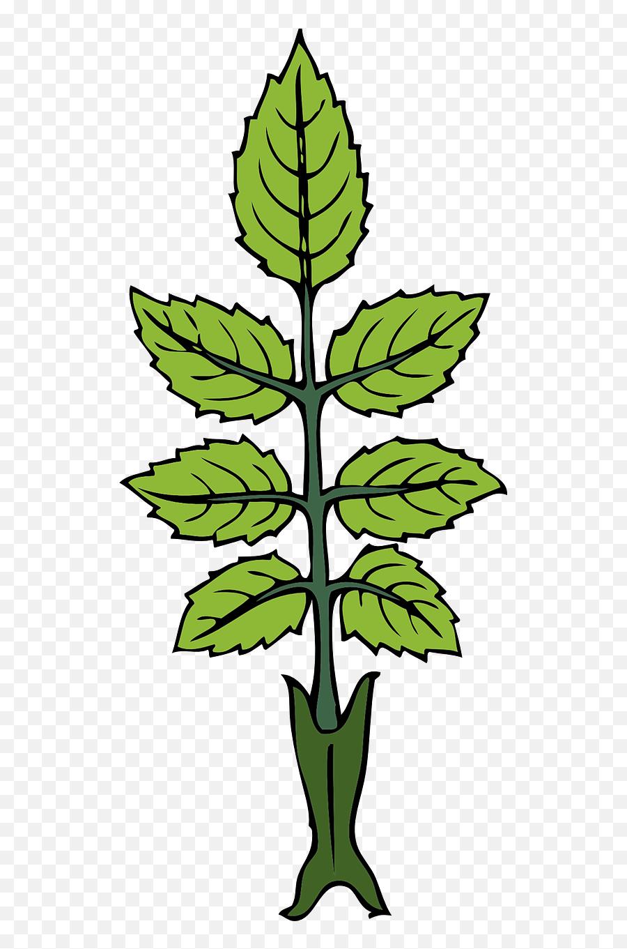 Mint Herb Leaves Green Fragrant - Draw A Mint Plant Emoji