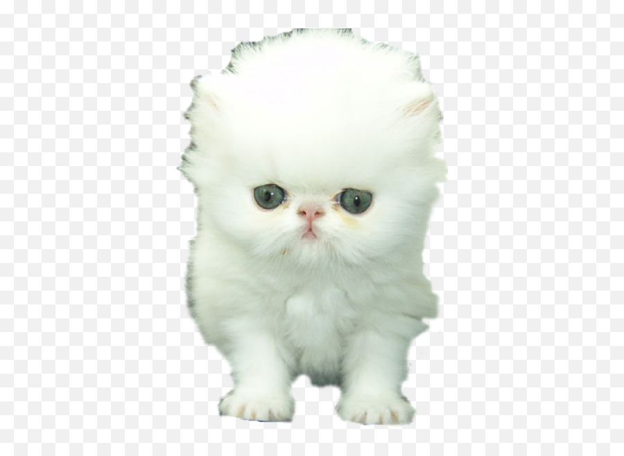 Emoji Keyboard And Imessage Stickers - Persian Cat White Cats,Cat Emoji Keyboard