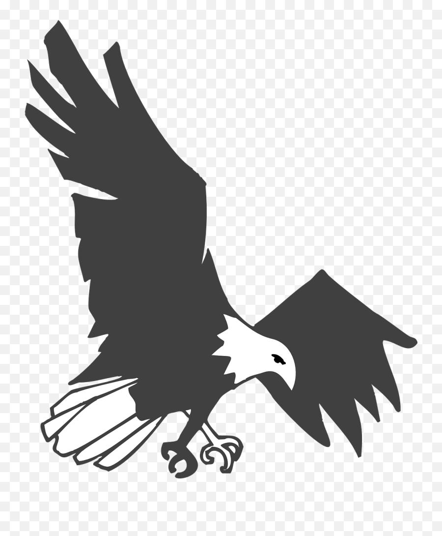 Eagle Black White Bird Flying   Gambar Burung Elang Hitam Putih ...