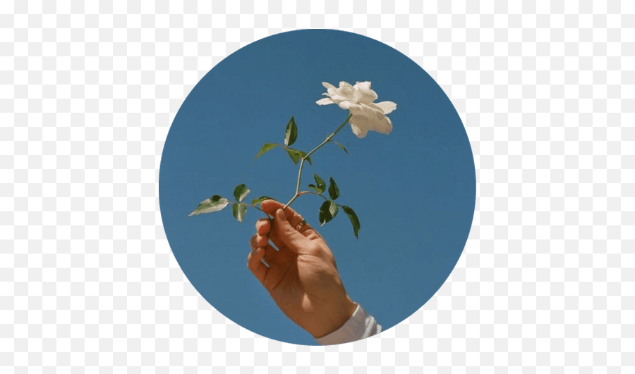 Merryweather Outfit Shoplook - Flower Profile Picture Circle Emoji,Broom Emoji For Iphone