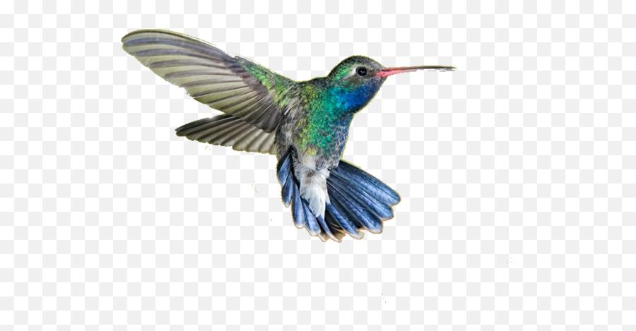 Hummingbird Png Transparent Hummingbird - Hummingbird Png Emoji