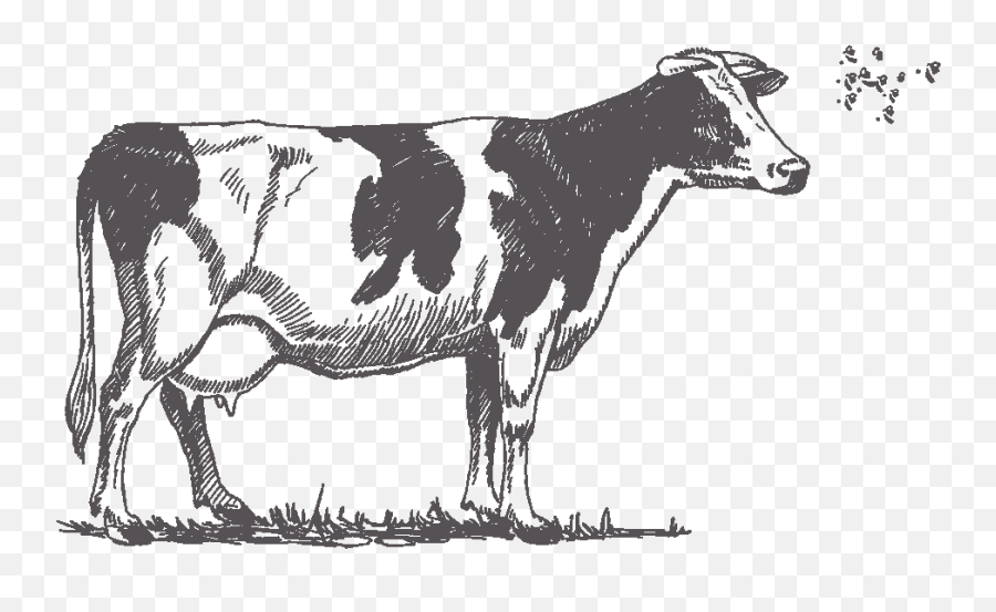 Cow - Black And White Cow Drawing Emoji,Cow Emoji Copy And Paste