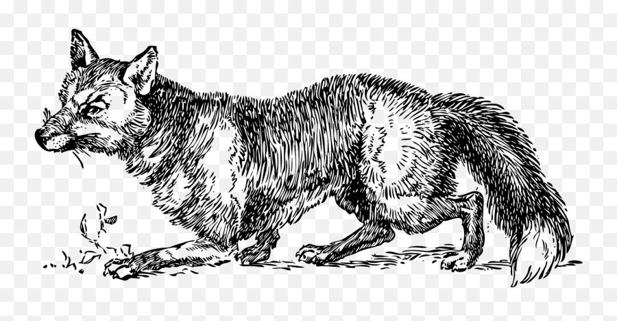Fox Foxes Wild Fox Canine Canid - Sly Fox Clipart Black And White Emoji,Fox Emoticon