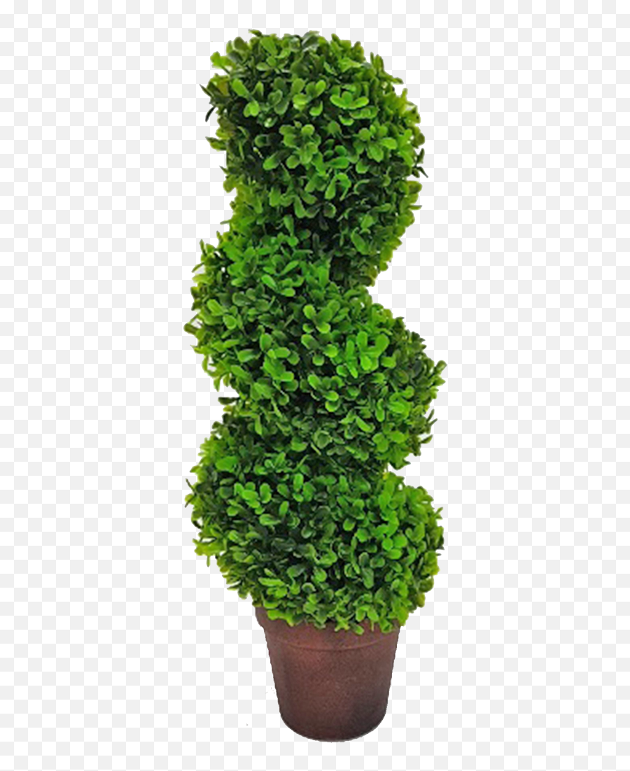 Topiary Tree Spiral - Grass Hd Png Download Topiary Png Topiary Tree Png Emoji,Spiral Emoji