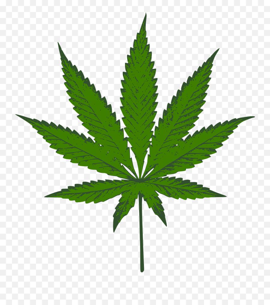 Cannabis Sativa Marijuana Weed Mary - Weed Plant Emoji