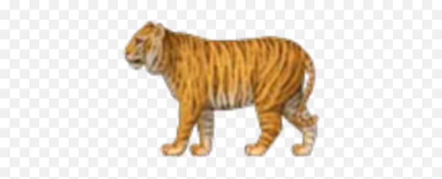 Tiger Emoji - Ios Emoji Tiger,Tiger Emoji