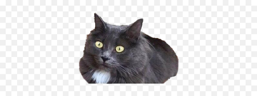Catshook - Black Cat Emoji,Black Cat Emoji