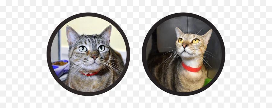 Meet Our Fosters - Tabby Cat Emoji,Black Cat Emoji