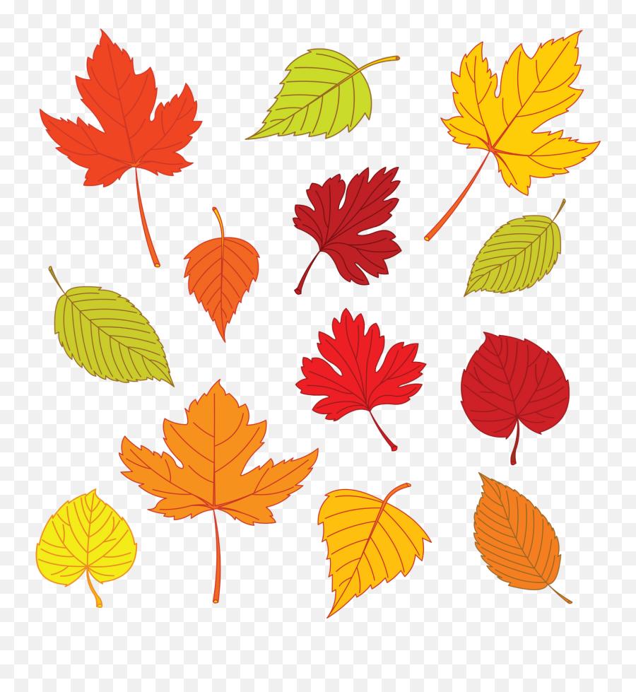 Fall Clipart Leaf Pattern Fall Leaf Emoji,Autumn Leaf Emoji