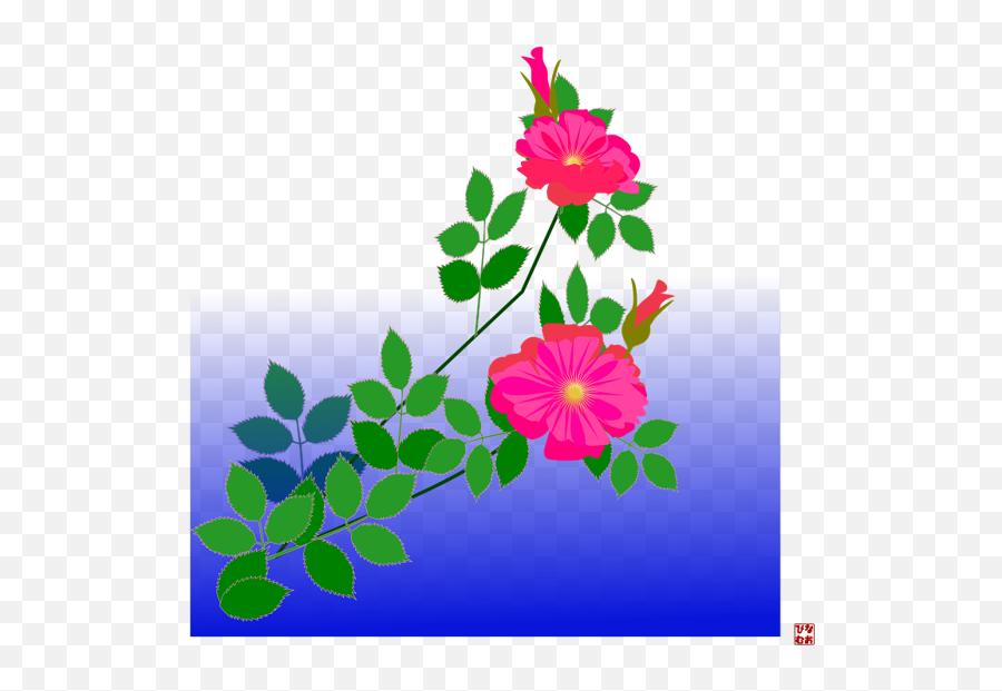 Rosa Glauca Emoji,Android Emoji To Iphone Translator