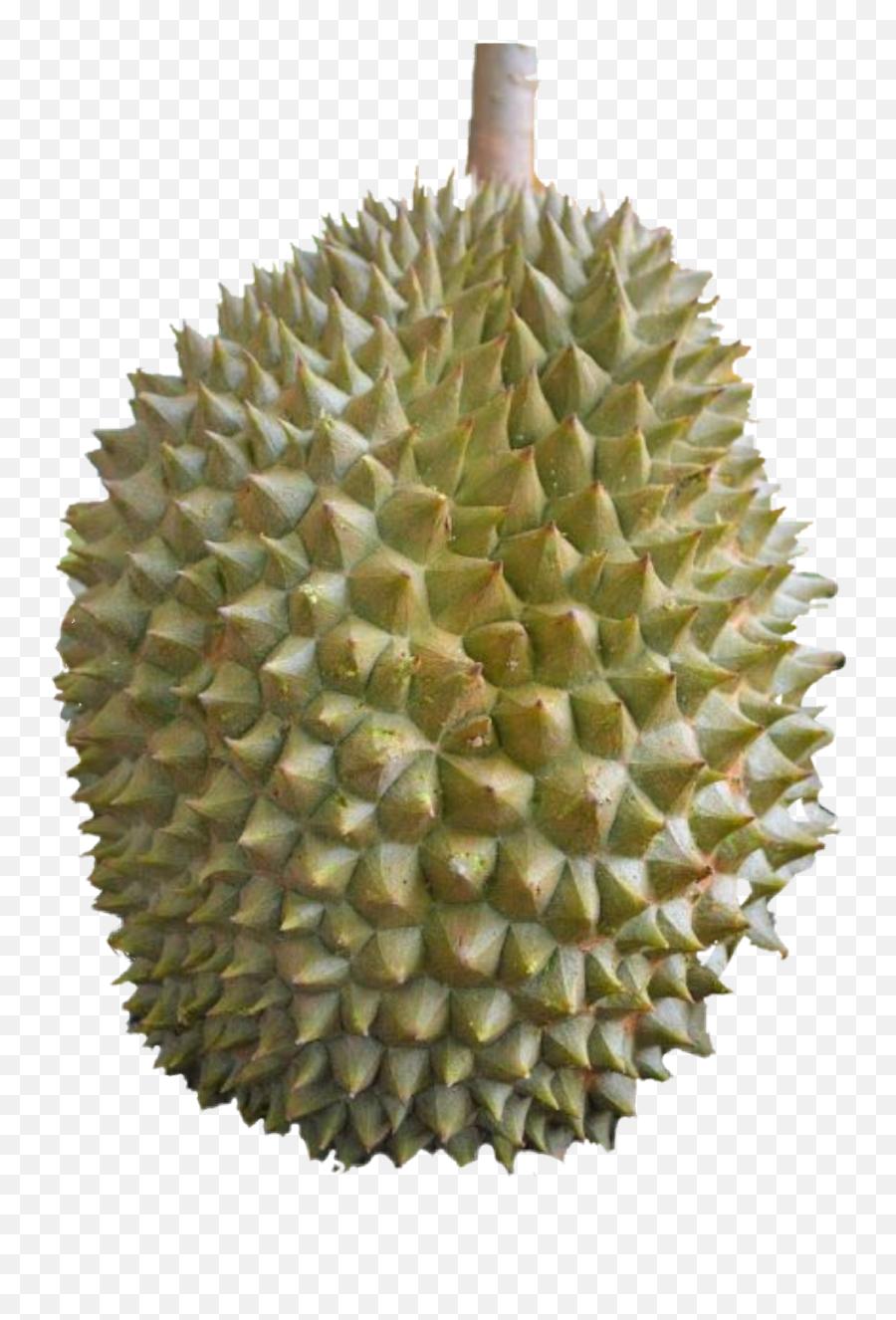 Durian - Durian Emoji,Durian Emoji