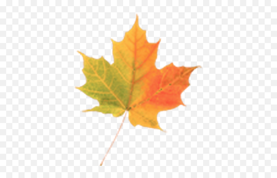 Autumn Leaves Donate Lwp On Google Play Reviews Stats - Autumn Leaf Emoji,Autumn Leaf Emoji
