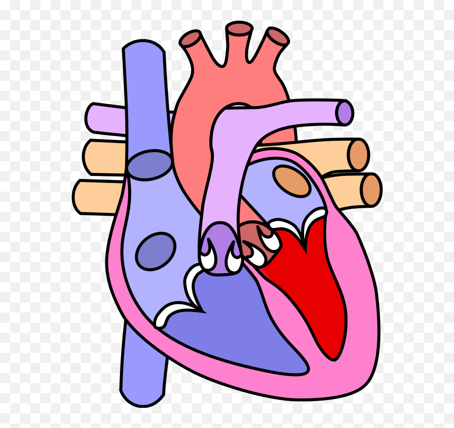 Heart Normal - Circulatory System Heart Drawings Emoji
